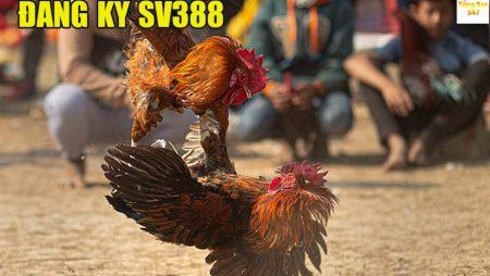 Đăng ký tài khoản SV388 – Tạo tài khoản đá gà ăn tiền